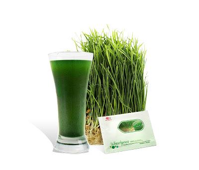 easy pha max wheatgrass weight loss