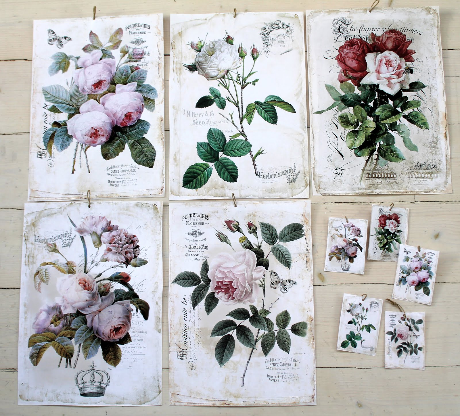 Flora rosor