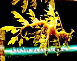 Naga Laut Berdaun