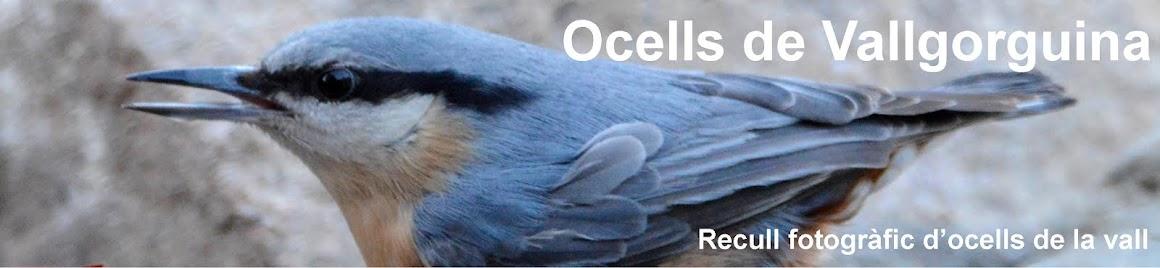 Ocells de Vallgorguina