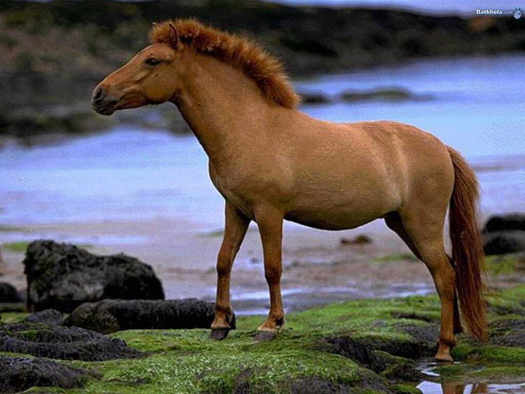 Good   Wallpaper Horse Dark Brown - wild+horses+wallpapers+24  You Should Have_46378.jpg