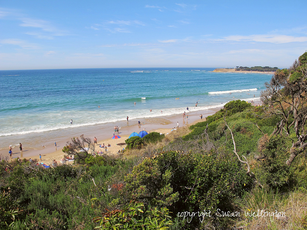 Summer view of Torquay beach, Victoria, Australia. Photo by susan wellington