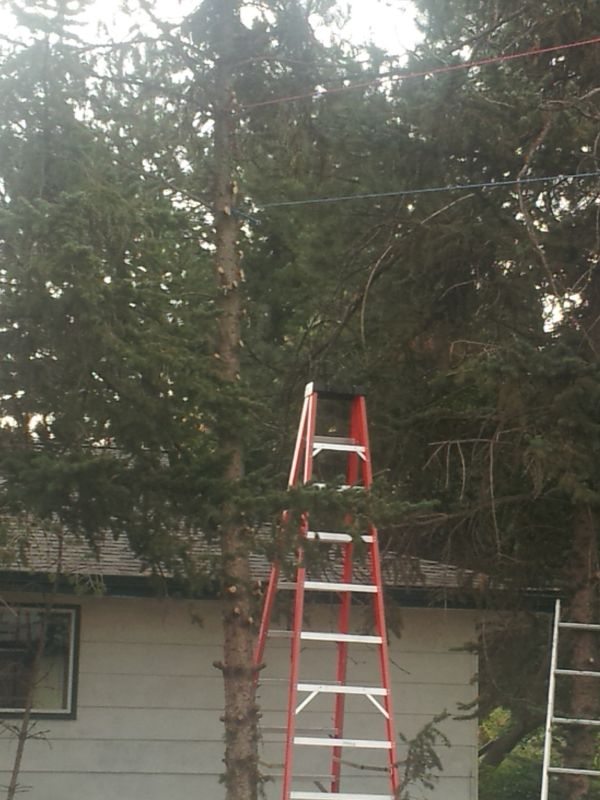 how to cut down high tree limbs