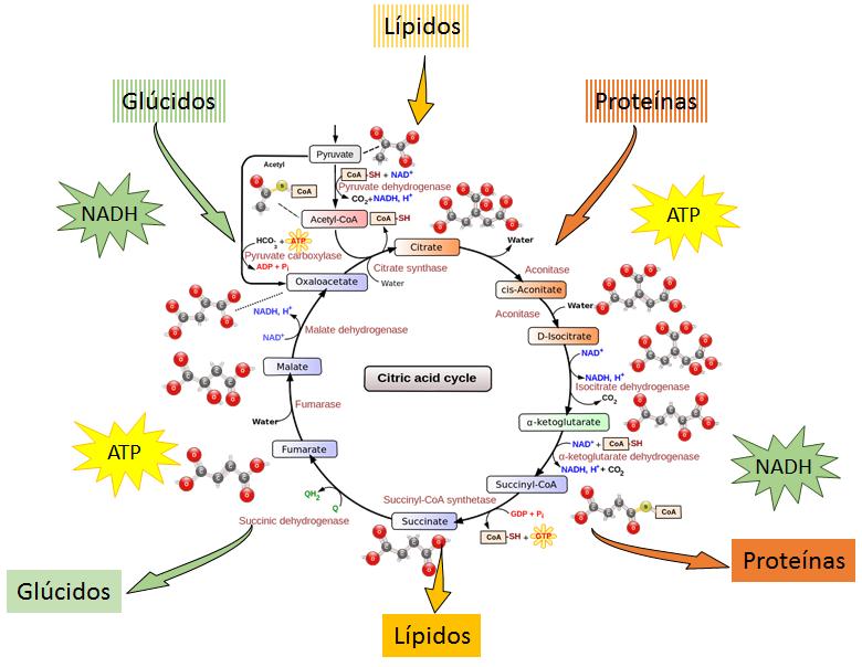 proteina mas anabolica del mercado