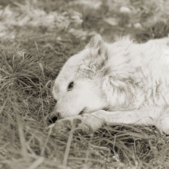 Isa Leshko photography black and white elderly animals melancholic