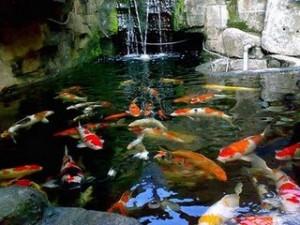 kolam ikan koi.kolam relief.kolam air mancur   love green