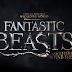 Harry Potter | Primeira imagem de 'Animais Fantásticos e Onde Habitam'