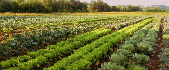 Des légumes adaptés à votre sol