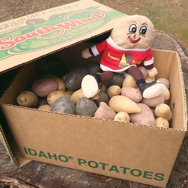 Purple Potato Puffs from www.bobbiskozykitchen.com