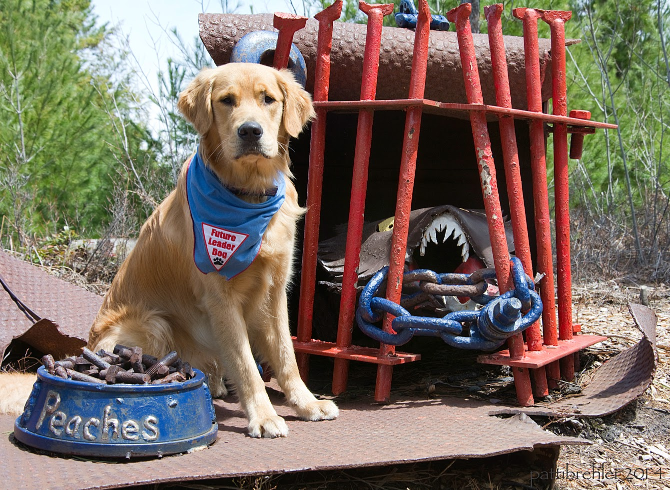 "The golden retriever sits on a section of brown metal facing the camera. On the left in front of the dog is a large blue metal dog food bowl with the name ""Peaches"" on it. There are large metal bolts in the bowl lke dog food. To the right behind the dog is a metal ""cell"" with red metal bars with a blue chain holding them together. Inside is some kind of creature with his mouth open and large white teeth."