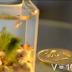 Το πιο μικρο ενυδρείο στον κόσμο!!! (video)