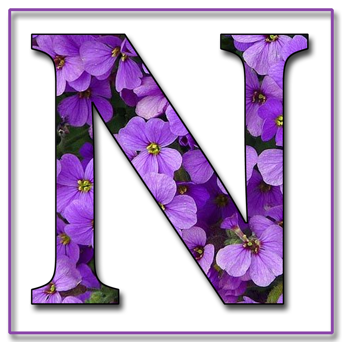 The letter c in purple