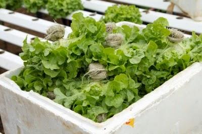 الأطعمة العضوية, الأغذية العضوية, الأغذية الطبيعية