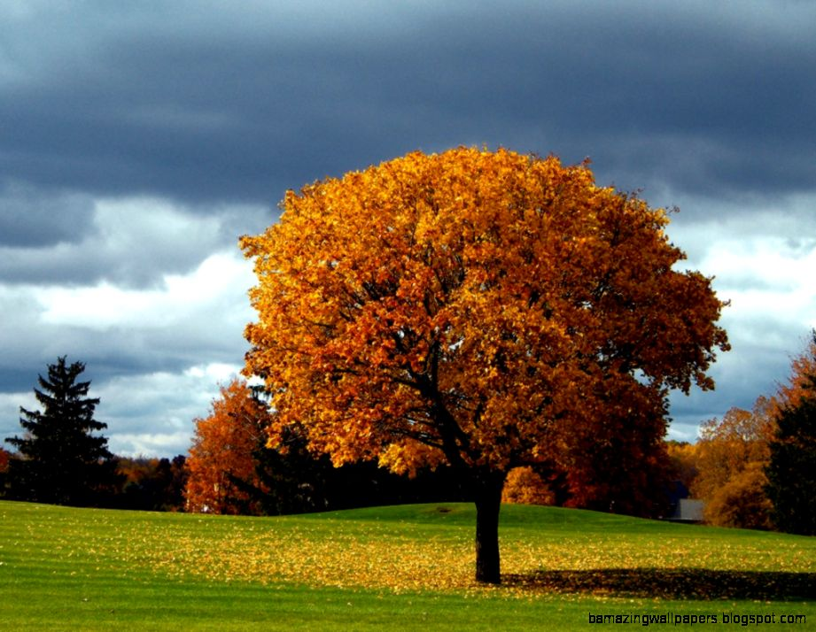 Beautiful Autumn Tree  One HD Wallpaper Pictures Backgrounds FREE