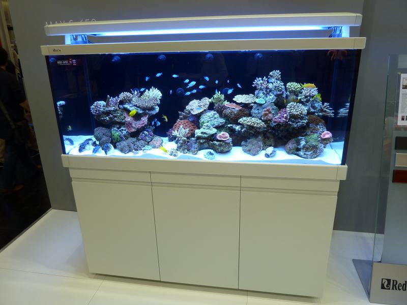 seahorse aquariums june 2012. Black Bedroom Furniture Sets. Home Design Ideas