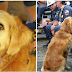 Last Known 9/11 Search & Rescue Dog Honored With Special Birthday Celebration