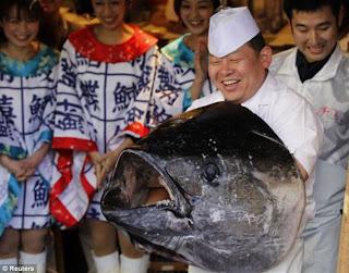 Ikan Tuna Gergasi