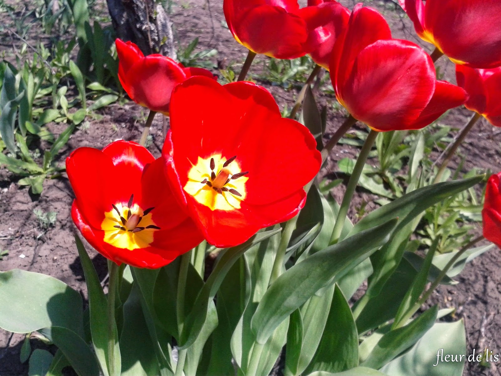 Какие цветы дарят дочке