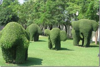 Pagar Tanaman Berbentuk Gajah / hedge