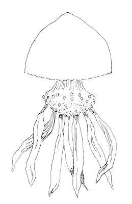 ink drawing of a jellyfish