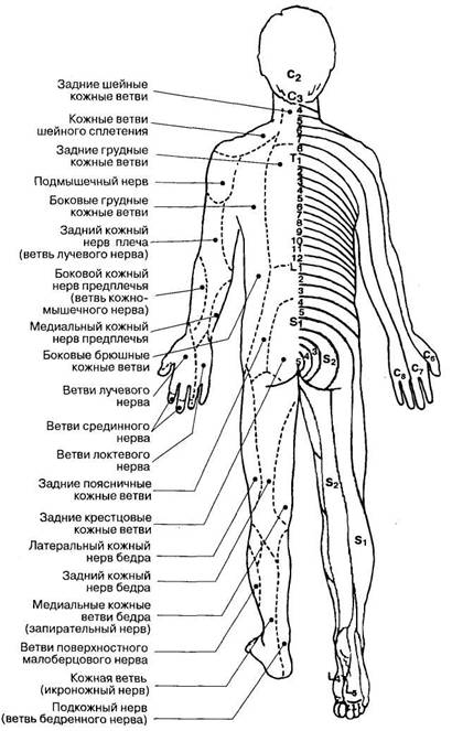 Массаж при боли шейного отдела позвоночника