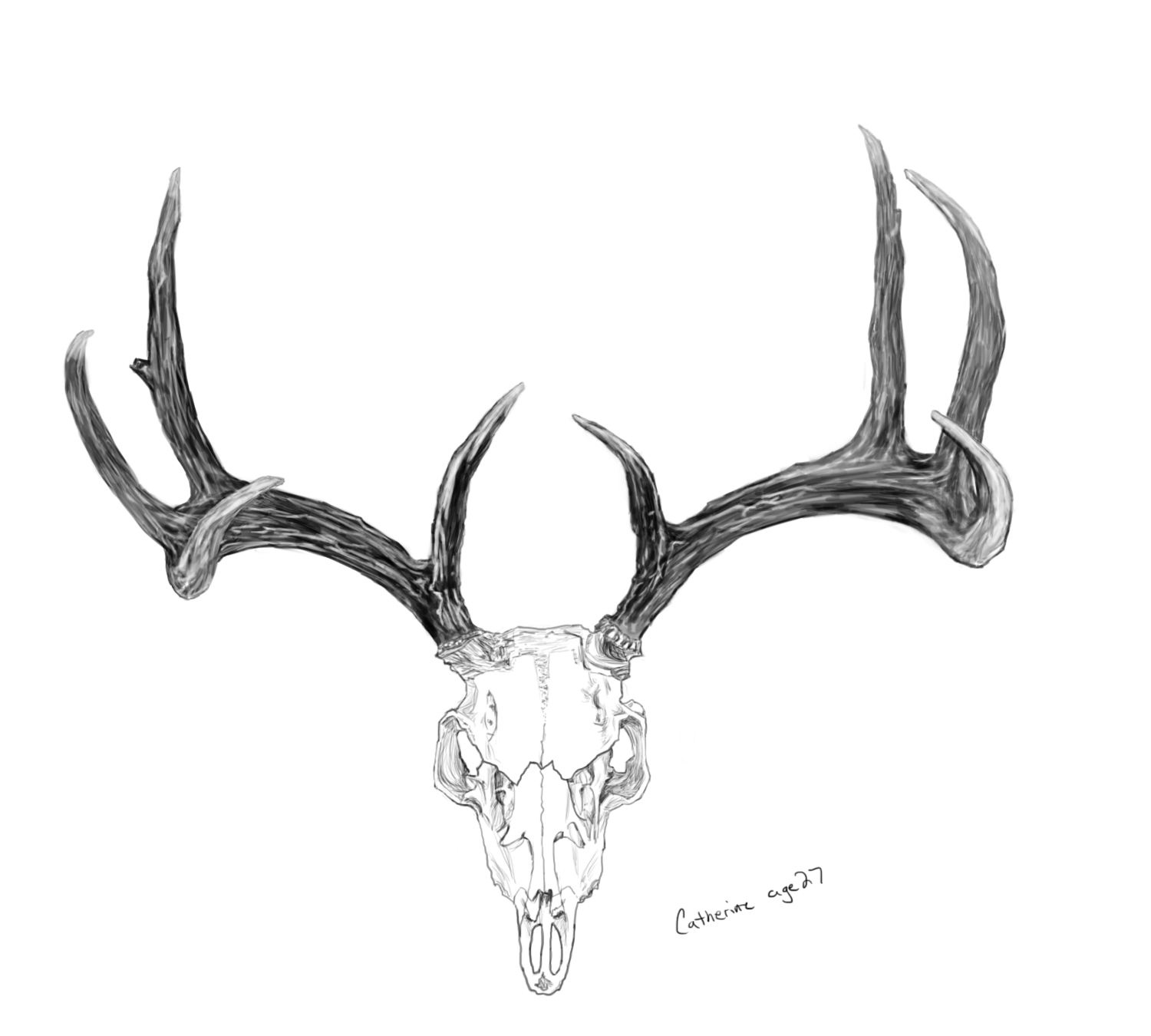 deer antlers drawing easy - photo #24