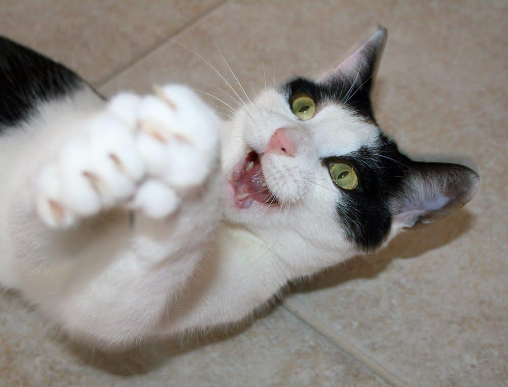 Happy Wednesday Cat Wordless Wednesday Happy Boy
