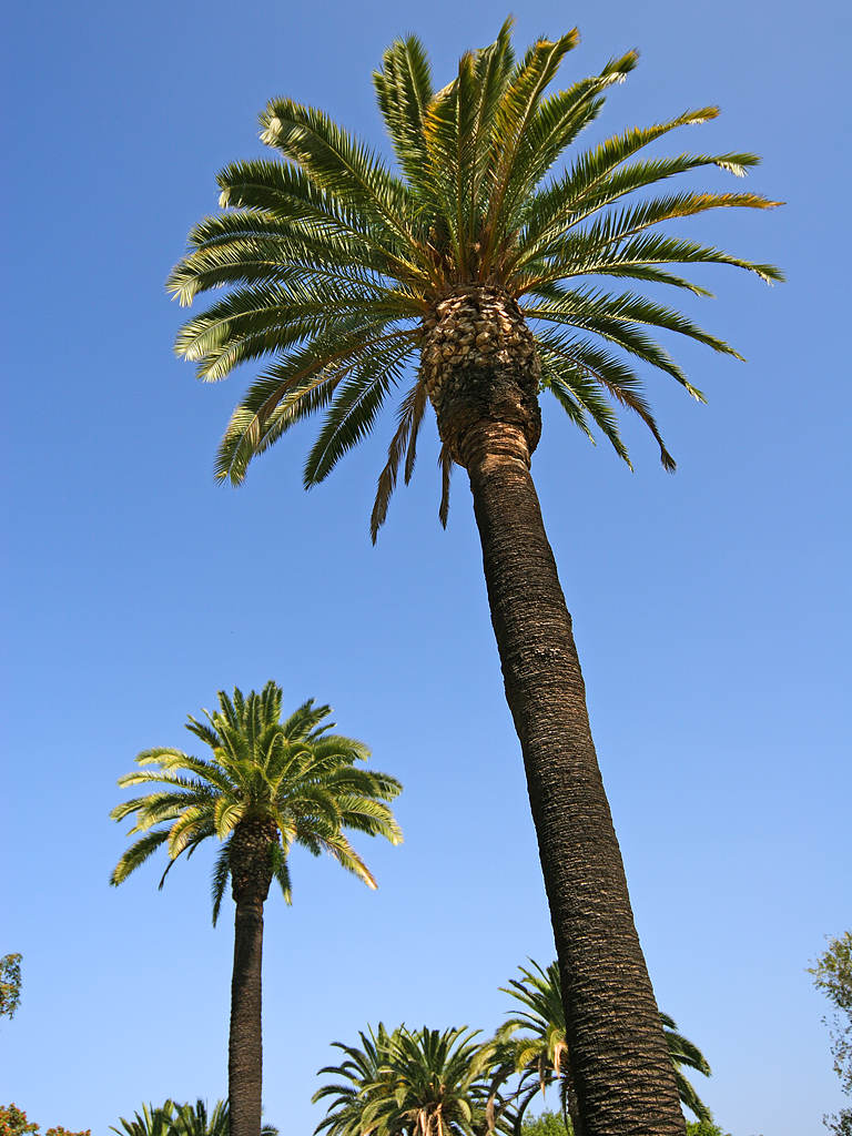 palm tree pictures hits all