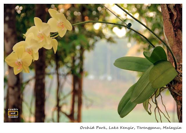 Tasik Kenyir/ Lake Kenyir, Terengganu, Malaysia | www.rambleandwander.com