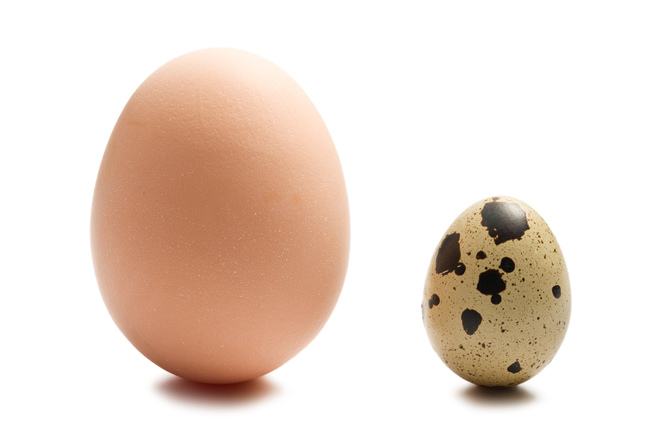 using quail egg to increase platelet Dr hunter cell biology  usually these viruses greatly increase a person's  the sis oncogene was derived from the cellular gene for platelet.