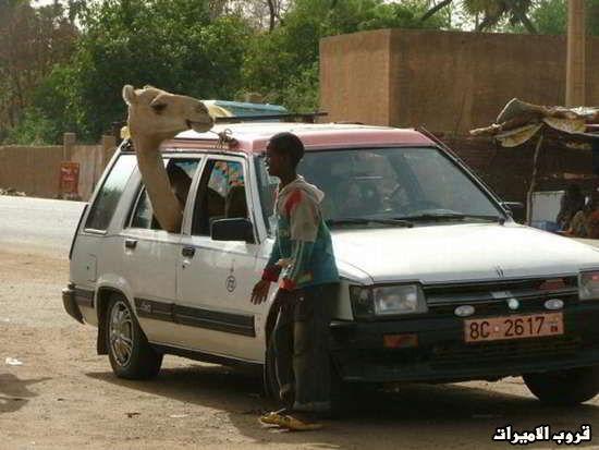 صور  من افريقيا  مع  التعليق ! 13.jpg