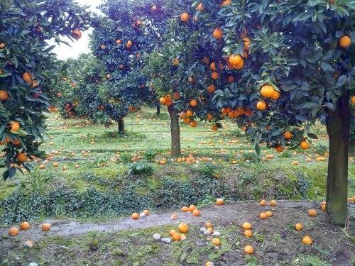 Σύσκεψη αγροτοκτηνοτρόφων στην Αρτα