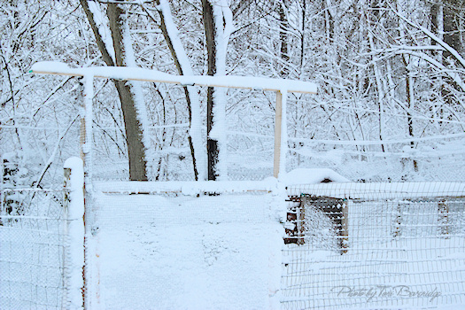 Snow Covered Chicken Coop Photo by Tori Beveridge AHWT