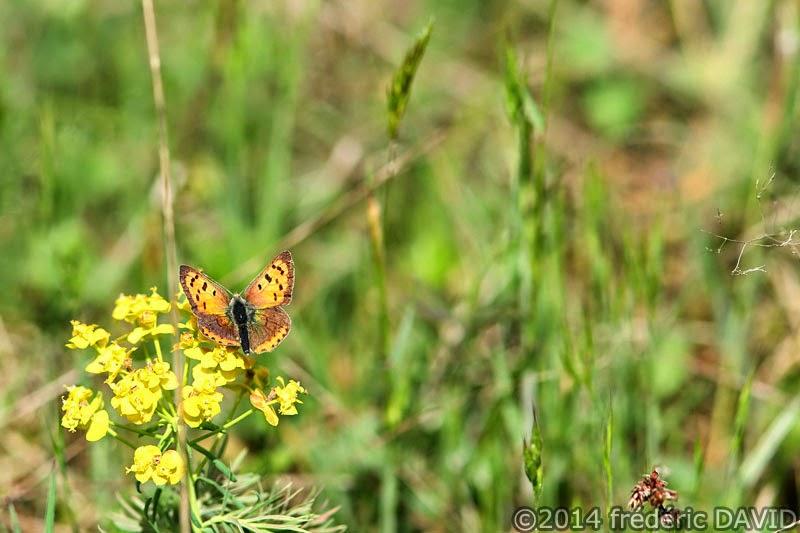 macro nature papillon forêt Fontainebleau