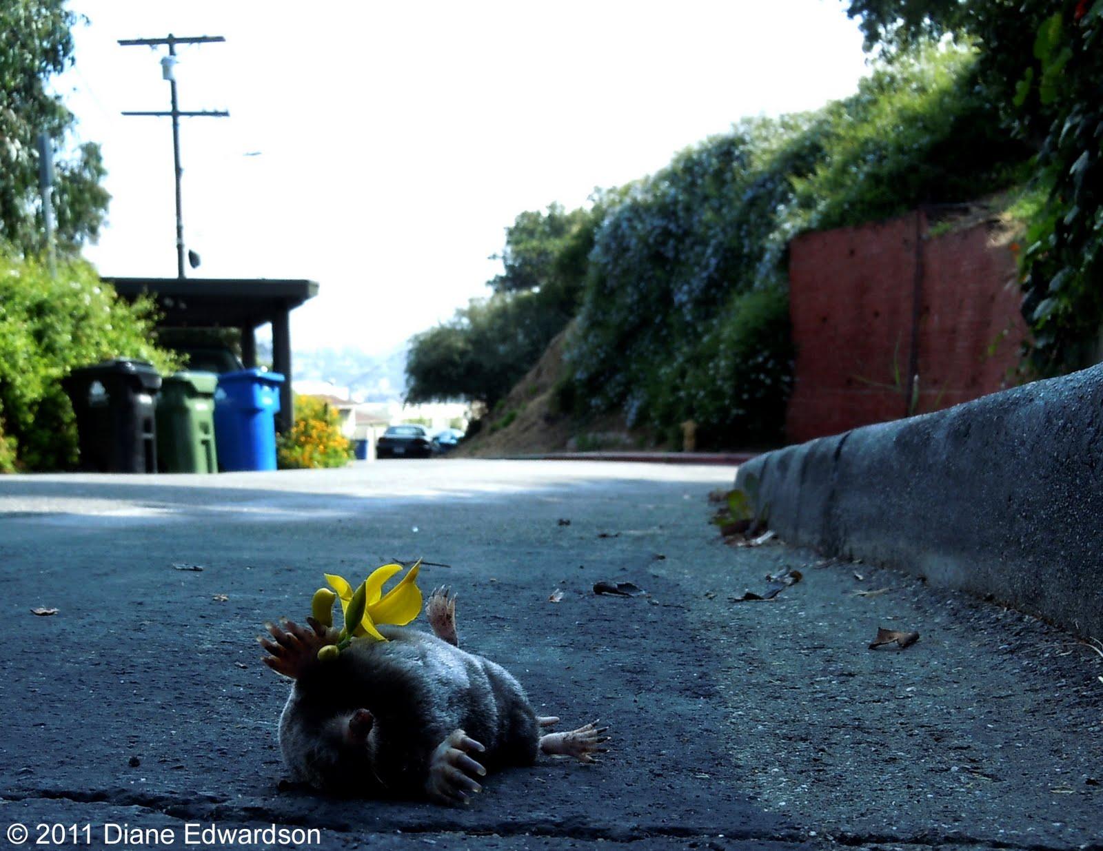 mole vs gopher hill