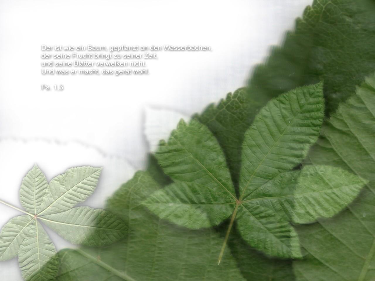 Wie ein baum gepflanzt an wasserb chen christliche hintergrundbilder - Christliche hintergrundbilder ...