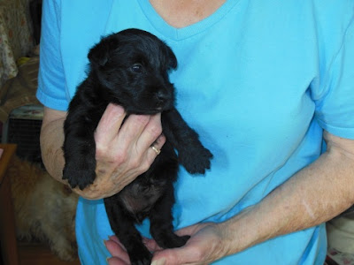 female pup #1 BLACK - Lars Larson