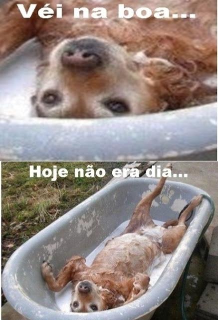 Sofrimento de um cão tomando banho