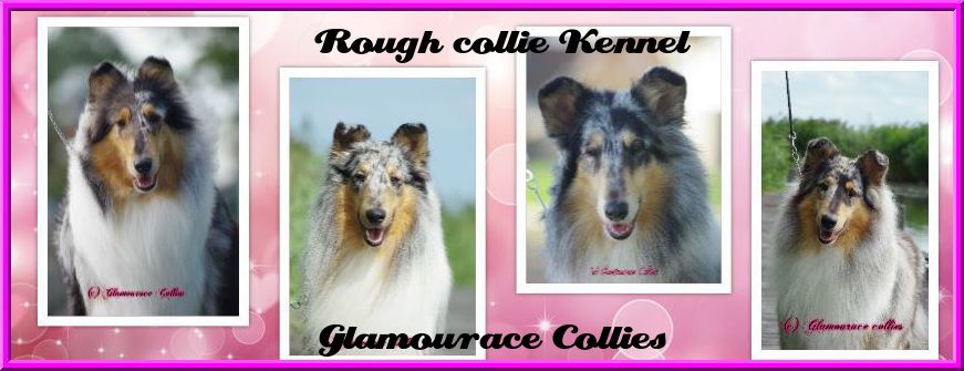 Glamourace Collies