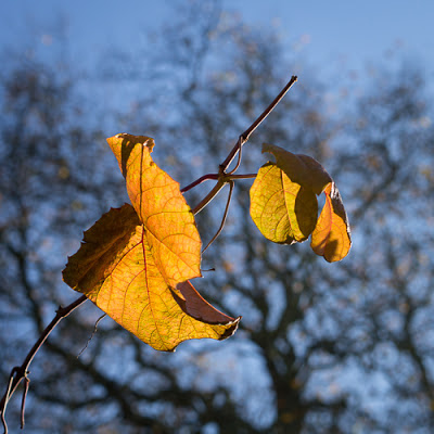 Autumn Colour 4, November 2012 © Graham Dew