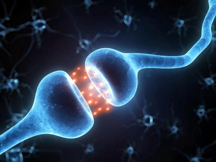 Ilustrasi aktiviti sinaptik