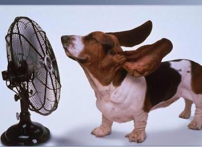 4 Tips Merawat Hewan Peliharaan Saat Cuaca Panas