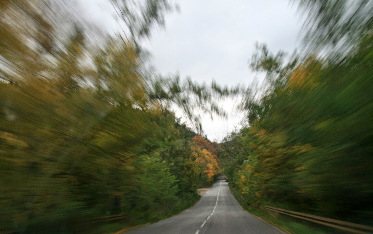 Zooming along a tree lined road