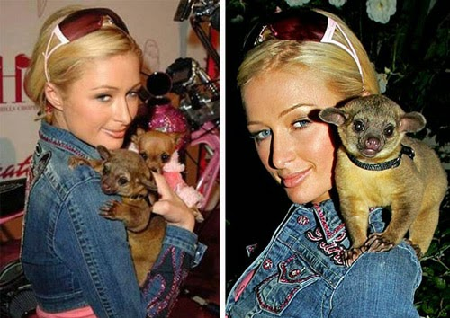 Famous Persons with Exotic Pets Photo Gallery