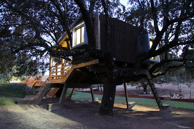 Casa na árvore enraizada