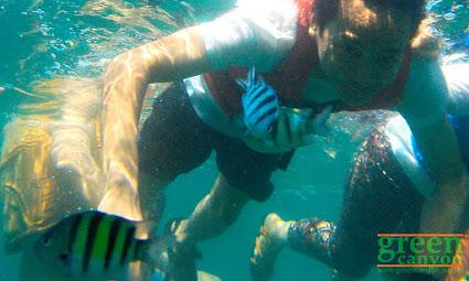 Underwater Pangandaran