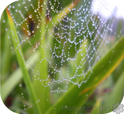 Raindrops on Spiderwebs