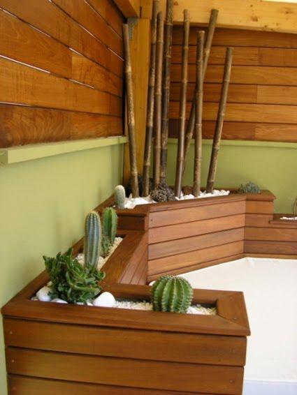 diseño creativo jardin cactus