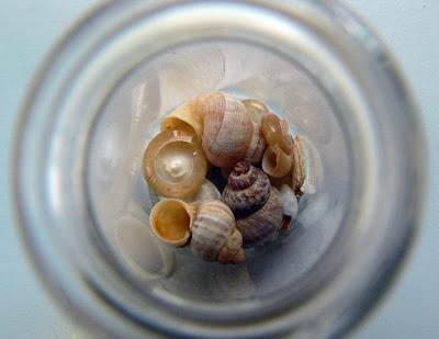 Fossil snails signal a humid Mediterranean