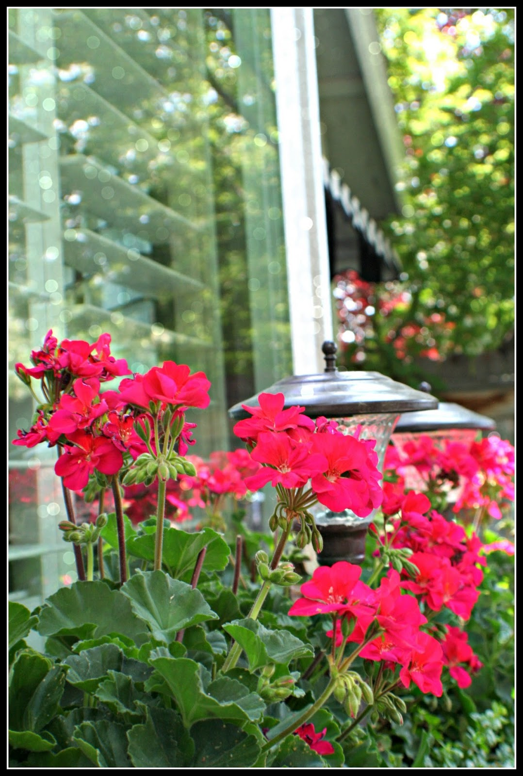 Window Box Designs (PICTURES ) - Victoriana Magazine Pictures of geraniums in window boxes